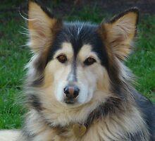 The beauty of a cross breed by Hermann Hanekom