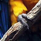 Talons and Feathers by Jon Staniland