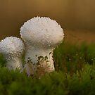 Puff Balls by Glynn May