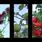 Autumn Fruits  by dawnandchris