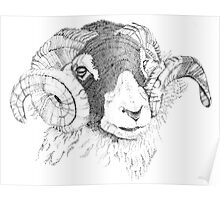 Swaledale Ram  Poster