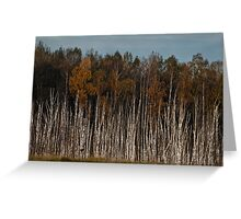 Birches (Autumn 2010) Greeting Card