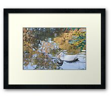 Beautiful Reflections: White Duck on Canal Framed Print
