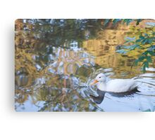 Beautiful Reflections: White Duck on Canal Canvas Print