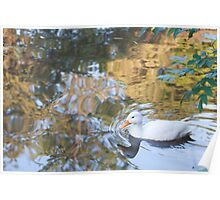 Beautiful Reflections: White Duck on Canal Poster