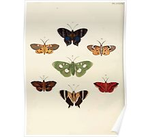 Exotic butterflies of the three parts of the world Pieter Cramer and Caspar Stoll 1782 V3 0268 Poster
