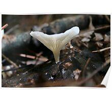 Mushroom 004 Poster