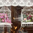 Bird Cages  by Candypop