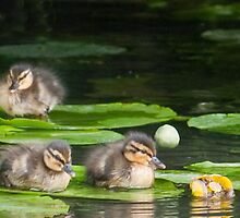 Baby Mallards on Lily Pad by Ann Miller