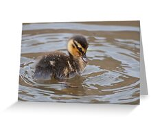 Little Mallard Duckling Greeting Card