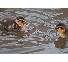 My Brother and Me: Mallard Ducklings Photographic Print