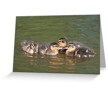 Time for a Chat: Mallard Ducklings Greeting Card