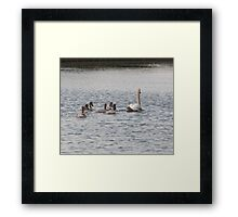 An Evening Sail: Mute Swan Family on Bingley Canal Framed Print