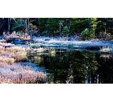 frosty swamp Photographic Print
