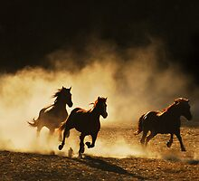 Out of the dust..... by Sue Ratcliffe