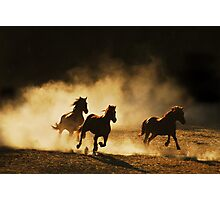 Out of the dust..... Photographic Print