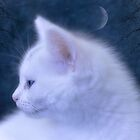 White Kitten at Night by Elaine  Manley