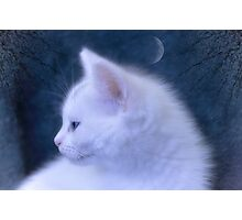 White Kitten at Night Photographic Print