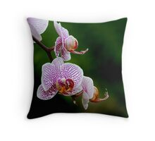Orchid Loveliness! Throw Pillow