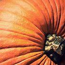 Ripe Pumpkin  by Fanboy30