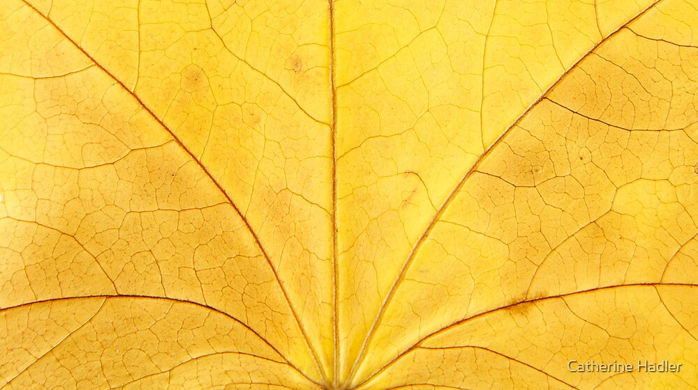 Autumn Leaf by Catherine Hadler