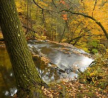 Forest Stream In Autumn by Stephen Vecchiotti