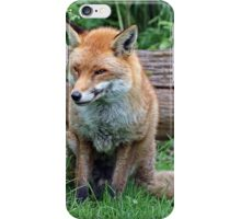 fox sitting iPhone Case/Skin