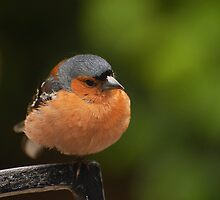 little bird by chrisdeschepper