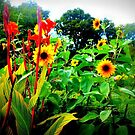 bright flowers in Central Park by ShellyKay
