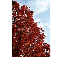 Red, white & blue in nature..... Photographic Print