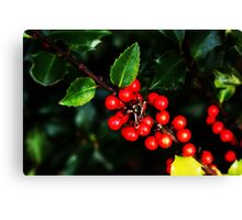 Little red holly berries.... Canvas Print