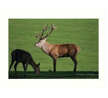 Big Red Wollaton Park Art Print
