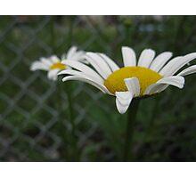 Be a Spiritual Gardener  Photographic Print