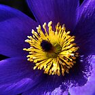 Purple petals by Parnellpictures