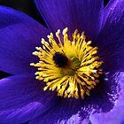 Purple petals by Parnellpictures