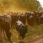 Kenyan cowboy by amulya