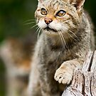 The Curious Cat by Peter Denness