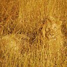 The king of Masai Mara by amulya