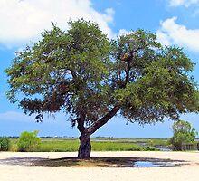 The Great Oak Tree_Color by imagetj