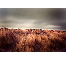 Marram Grass.. Photographic Print