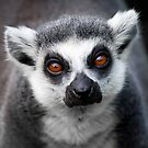 You Talkin' to Me! by Peter Denness