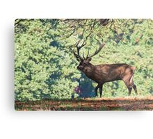 Stag in the tree's Metal Print