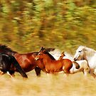 Choctaws on the move..... by Sue Ratcliffe