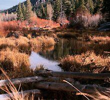 Big Meadow Creek, Lake Tahoe, California by Larry Darnell