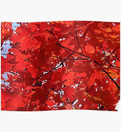 Red Lit Maple Poster