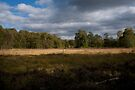 Landscape Wimbledon Common: London, UK. by DonDavisUK