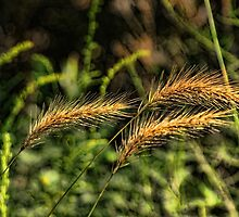 Wild Grass by Rick  Friedle
