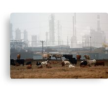 cattle near chemical works Canvas Print