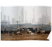 cattle near chemical works Poster