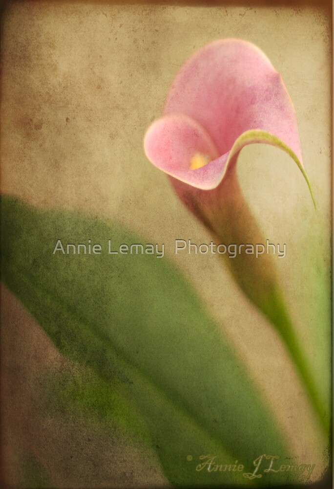 Mother's Love by Annie Lemay  Photography